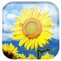 Sunflower Live Wallpaper - ����� ���� � ������������