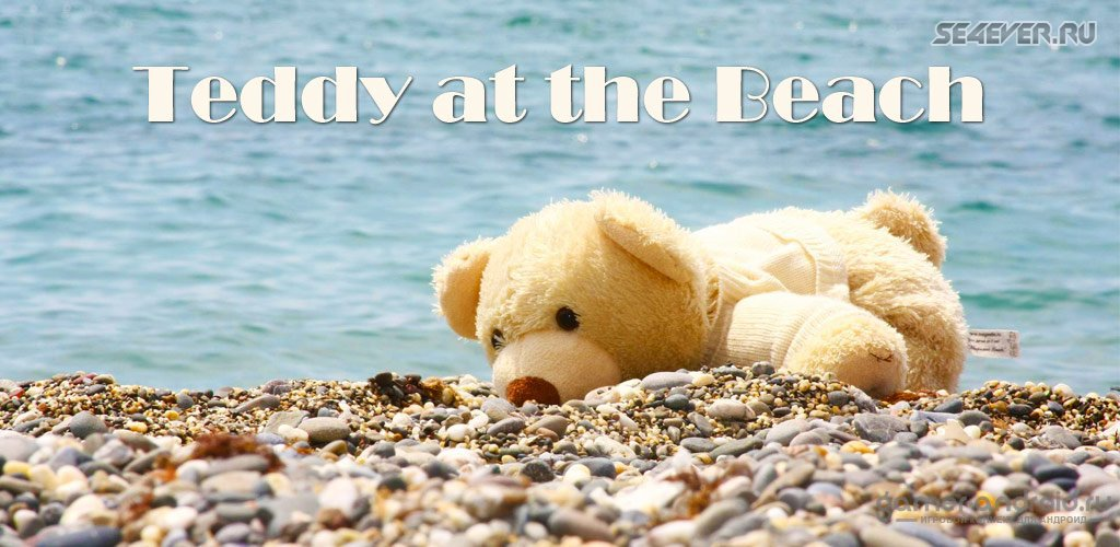 Teddy at the Beach- ����� ���� � ��������