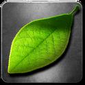 Fresh Leaves - Весенние обои