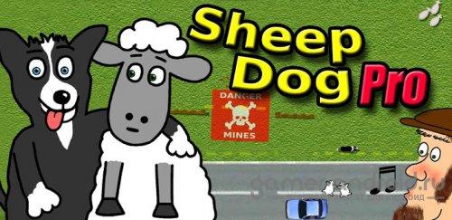 Sheep Dog Pro