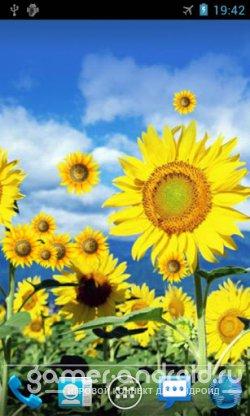 Sunflower Live Wallpaper - Живые обои с подсолнухами